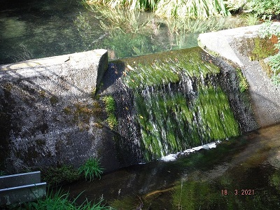 The flow of water over the weir at the Tautau, 18 March 2021. Date-stamps show how current flow compares to last year.
