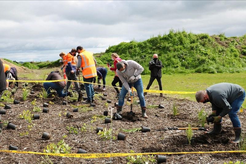 Waiari water treatment planting