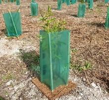 Waiari Trees
